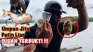 ALREADY PROVEN !!! LIVING JITU FISH WILD PATIN MONSTER