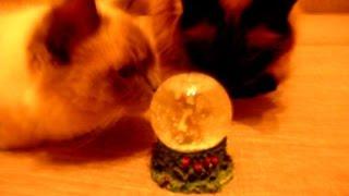 Смешные кошки и магический шар – Смешное видео про кошек – Мир кошек смешное видео