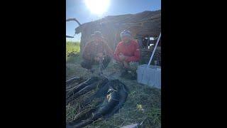 Рыбалка в Дельте Или бешеный клёв сома