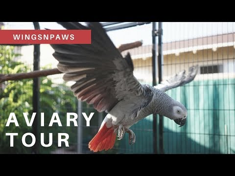 Aviary Tour with my African Grey