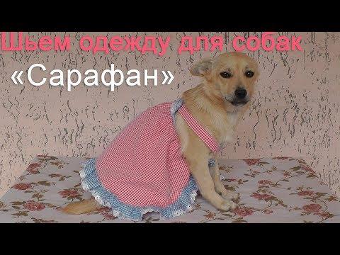 Шьем сарафанчик для собачки   Быстро и без выкройки