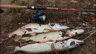 ЩУЧИЙ КОТЕЛ ВИДЕЛИ рыбалка на щуку туманным утром попали на жор щуки
