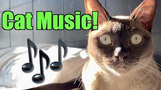 Burmese Cats Playing Music!  Cute & Funny!