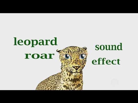 How A Leopard Roar - Sound Effect - Animation - YouTube
