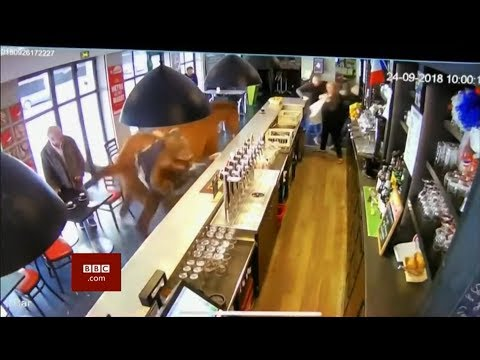 "Lucky escape ""A horse walks into a bar..."" (France) - BBC News - 1st October 2018"