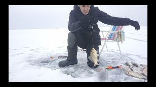 Зимняя рыбалка на карася Карась утащил удочку
