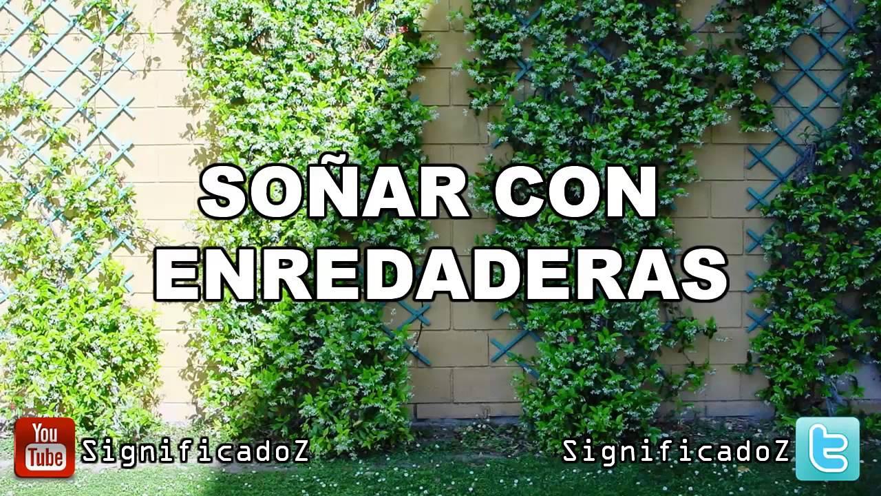 Significado de so ar con enredaderas trepadoras youtube for Plantas trepadoras para muros