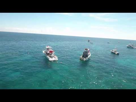 Drone flyover of Molasses Reef in Key Largo with Pennekamp Dive Shop