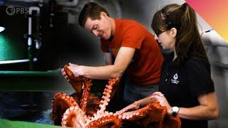 My Date With A Giant Pacific Octopus!