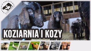 Lubuskie Angusowo - Koziarnia i Kozy