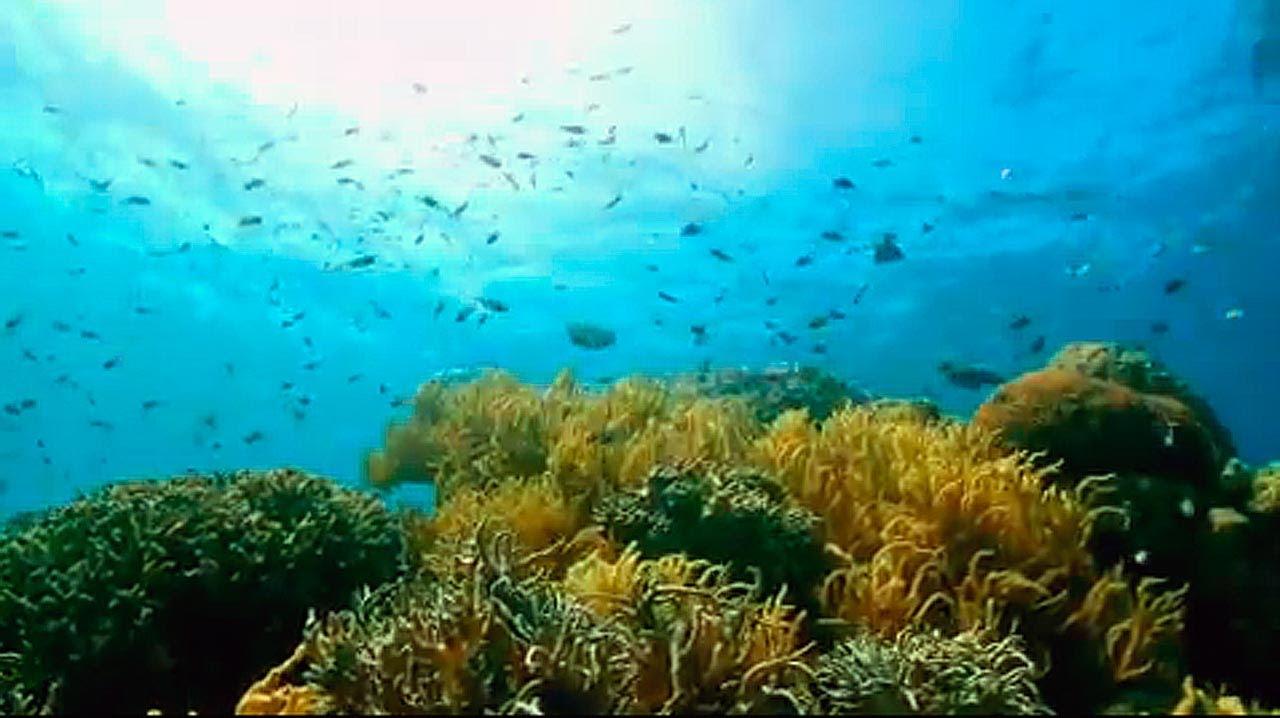 Great Barrier Reef Karte.Great Barrier Reef Australia S Great Natural Wonder