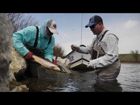 ORVIS - How To Fight Big Fish On Small Flies