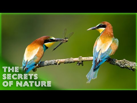 Sun-Seeking Creatures - A Mediterranean World - The Secrets of Nature