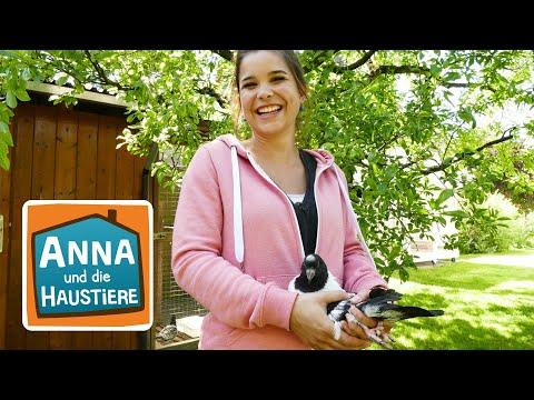 Taube   Information für Kinder   Anna und die Haustiere