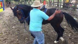 Como montar un caballo inquieto
