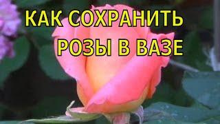 Смотреть видео чтобы розы долго стояли что нужно делать