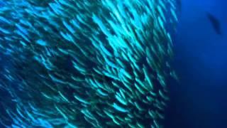 PLANET OCEAN - Clip 02