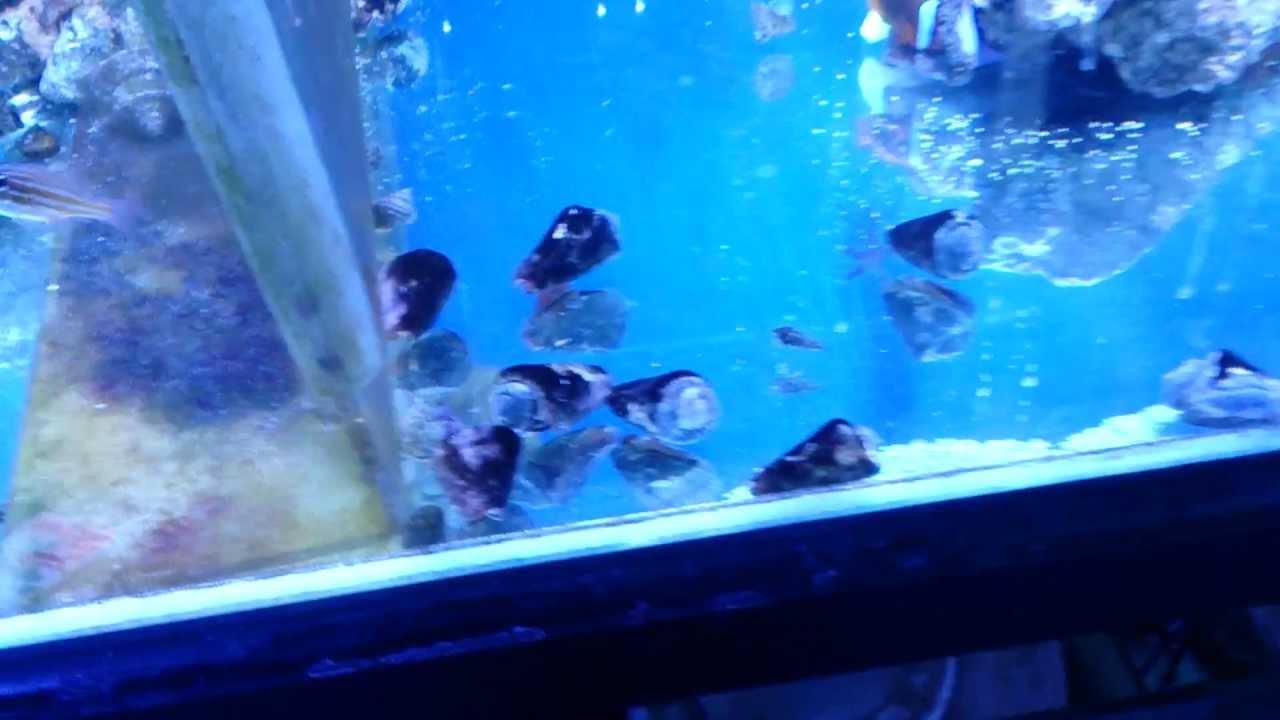 Freshwater aquarium fish that eat snails - Some Fish Do Eat Snails