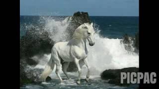 Короткий клип про лошадей