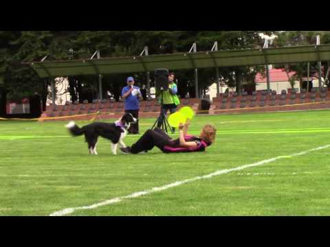 Tercera copa Disc Dog - smart Dogs bogota colombia