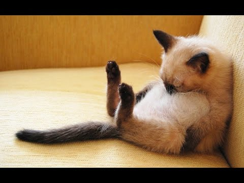 Ultimate funny and cute cat & dog compilation – Clips that will make your day