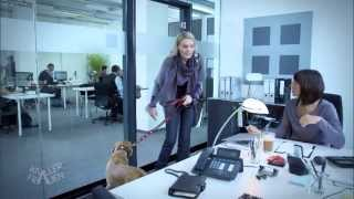 Geht das? Hund im Büro?