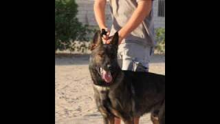 Kuwait K-9 Training