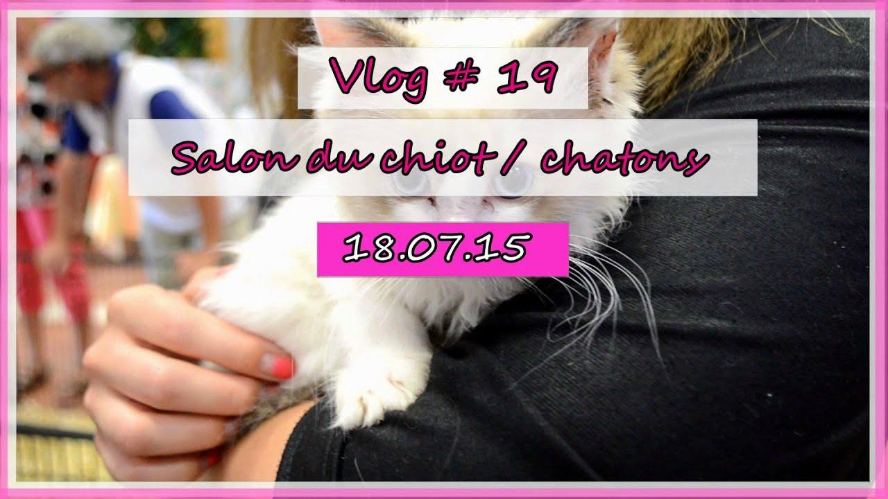 Salon du chiot et quelques chatons vlog youtube - Salon du chiot et du chaton ...