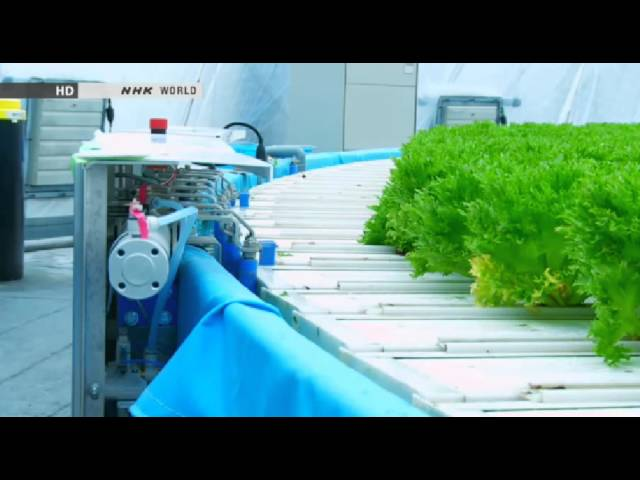 Amazing Hydroponic farm Japan Gandpa Dome