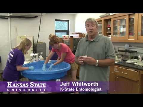 Brown Recluse Spider Research At
