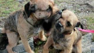 Easy, Border Terrier, En Bretagne. Rencontre Avec Budoc.