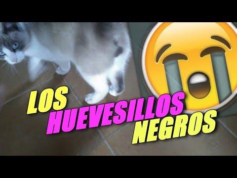 DICE QUE TIENE LOS HUEVESILLOS NEGROS   Mascotas de suscriptores