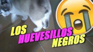 DICE QUE TIENE LOS HUEVESILLOS NEGROS | Mascotas de suscriptores