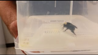 Beekeeping With Cody: Bee Lab Visit