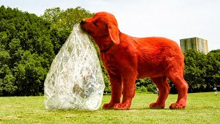 Clifford The Big Ręd Dog - Clifford fetches the Ball Scene (2021) Movie Clip