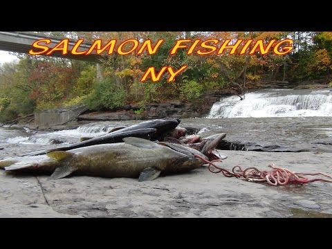 SALMON FISHING!!! 19 LBS SALMON ON MEDIUM ACTION 12 LBS TEST LINE