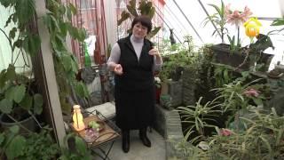 видео Зимний сад на балконе или озеленение балкона своими руками