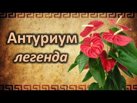 Легенда  о АНТУРИУМЕ.