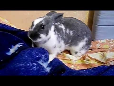 Злой кролик Петька Зайцев