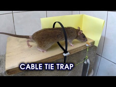 Thumbnail: Cable Tie Rat/Mouse Trap