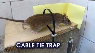 Cable Tie Rat/Mouse Trap thumbnail
