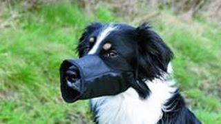 Сколько стоит намордник  для собаки? Дешевле только даром.