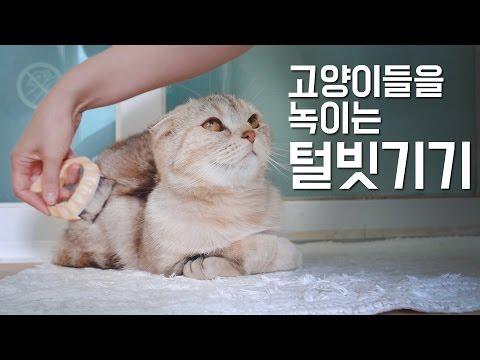 고양이들을 녹이는 털빗기기 방법How to brush your cat, so that they just melt. [SURI&NOEL]