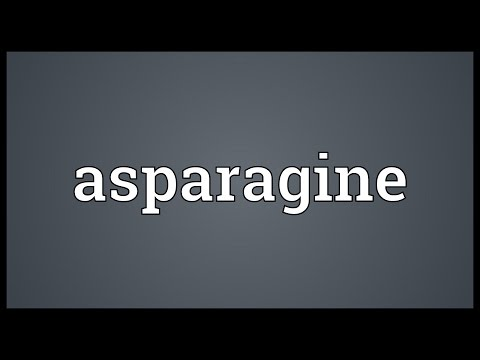 Asparagine Meaning