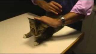 Pet sounds from HK vet