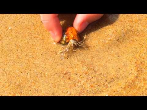 Море и ракушки