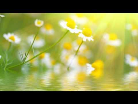 Zen : Musique zen anti stress & détente, sophrologie & bien-être