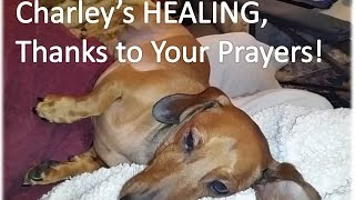 Buddha Boy Charley - He's Going To Make It Thanks To Your Prayers And Love