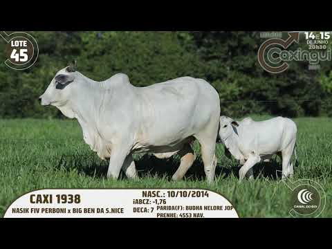 LOTE 45   CAXI 1938