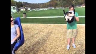 Śmieszne zwierzaki   Smieszne psy i Śmieszne koty 36